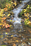 Mountain stream with green moss and autumn aspen leaves, Telluride, Colorado, USA.