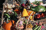 A country wagon full of vegetables from the fall harvest