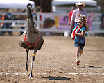 Micah Williams, 5, competes in an emu race during the 54th International Camel Race in Virginia City, Nev., on Friday, Sept. 6, 2013.  <br /> Photo by Cathleen Allison