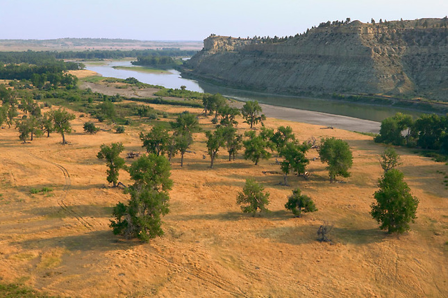 Pasture with Cottonwoods along Yellowstone River
