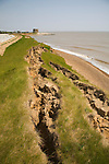 Rapid coastal erosion of crumbling soft cliffs at East lane, Bawdsey, Suffolk, England, 2012