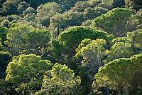 Europe/France/Languedoc-Roussillon/30/Gard : Le pont du Gard (patrimoine Mondial de l'UNESCO) Forêt humide sur les bords du  Gardon