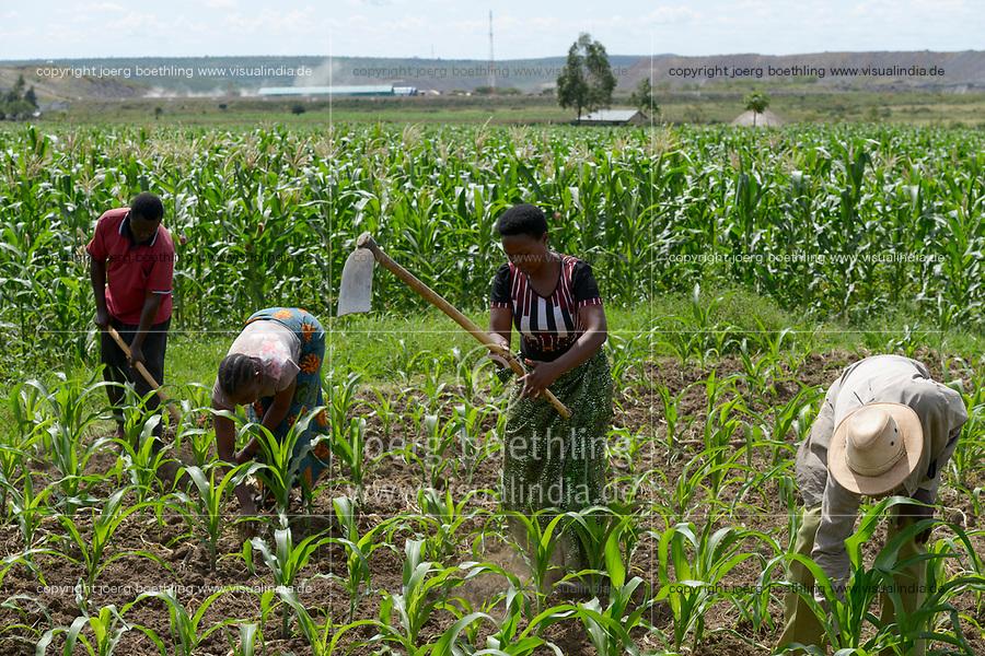 TANSANIA, Tarime Distrikt,Dorf Nyakunguru , Hintergrund Acacia Gold Mine, rechts Mary Mugesi Chacha, 40 Jahre, und ihr Mann Mugesi Chacha bei Arbeit im Maisfeld