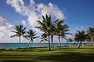 A field of green grass and palm trees along side a beautiful beach in the Dominican Republic.