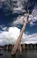 """Mateiros de canoa escolhem a madeira e serram as copas das ·rvores para depois mergulhadores cortarem os troncos do lago, que se formou apÛs a construÁ""""o da represa. TucuruÌ - Par· - Brasil<br /> 27/04/2000. <br /> ©FOTO: PAULO SANTOS/INTERFOTO<br /> Negativo Cor 135 N∫ 5455 T1 F11"""
