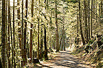 Dappled sunny walk through the forest
