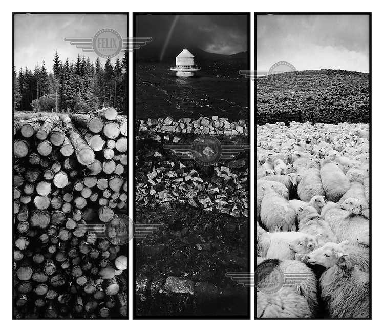 Triptych composition - Left: a pile of tree trunks on the edge of a Forestry Commission woods near Maentwrog, North Wales. Centre: A pumpstation in the middle of Trywerin reservoir which was formed when a vallery containing a Welsh speaking community was flooded. The inhabitants were forcibly removed, Mid Wales. Right: a flock of sheep on Moel Wnion near Bethesda in North Wales.