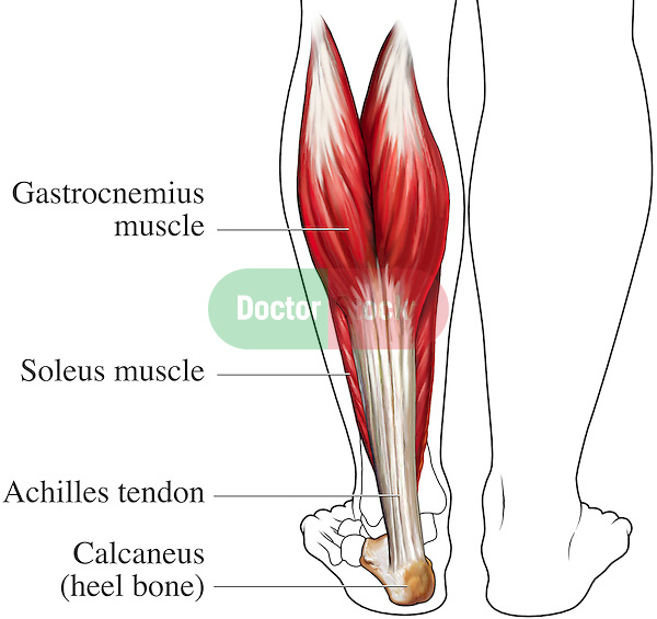 Achilles Tendon Posterior Back View Doctor Stock