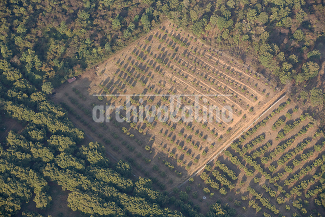 Avocado plantantion in Uruapan, Michoacán state, mexico. Environmental organizations are critizing the use of pesticides in large scale as well the high demand of water for this product for export