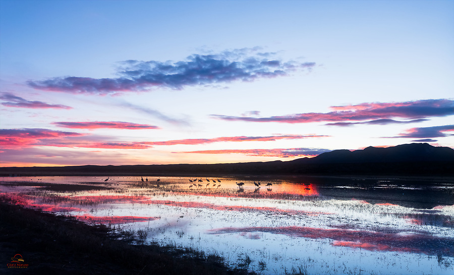 Switched to a wide-angle lens to highlight the gorgeous light, clouds, and birds on the pond at sunset. Bosque del Apache National Wildlife Refuge, New Mexico.