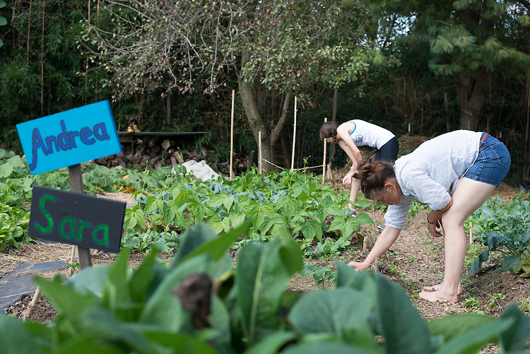 Students work in the West State Street Gardens during the Sustainable Agriculture class.