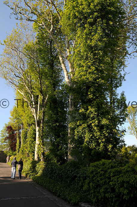 A couple take a stroll down a tree-lined street in Saint-Valery-en-Caux