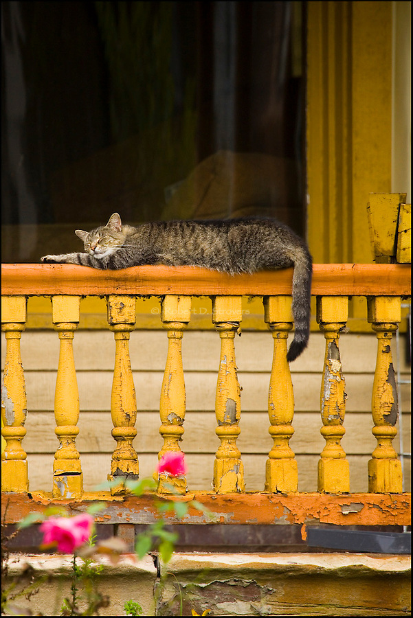 Urban - Snoozing Cat on Porch Rail
