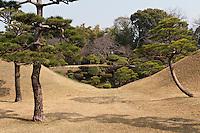 Pinus trees in the Suizen-ji garden, Kumamoto, Japan