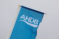 AHDB Flag<br /> ©Tim Scrivener Photographer 07850 303986<br />      ....Covering Agriculture In The UK....<br /> <br /> y,