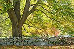 Fall foliage in Barnstable, Cape Cod, Massachusetts, USA