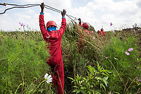 Members of the Red Ants clear illegal electricity connections in an informal settlement near KwaThema. <br />