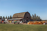 USA, Oregon, Bend, the annual pumpkin patch located in Terrebone is equipped with a corn maze, petting farm, pumpkin cannon and rests underneath the breathtaking Smith Rock State Park