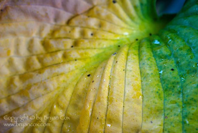 Fall color, Portland Rose Garden, Portland, Oregon