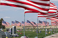 Memorial Day Flags in Cutbank