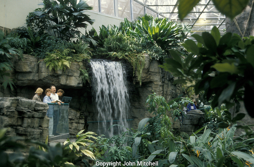 A waterfall in the Tropical Rainforest Ecosystem of the Montreal Biodome, Montreal, Quebec, Canada