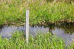 A ruler monitors the water level; water management is critical to the Everglades wildlife and ecosystem.