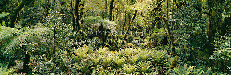 Forest in the Wild Natives Valley. Bligh Sound. Fiordland National Park. New Zealand.