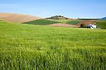 Rolling arable fields green barley crop near Alhama de Granada, Spain