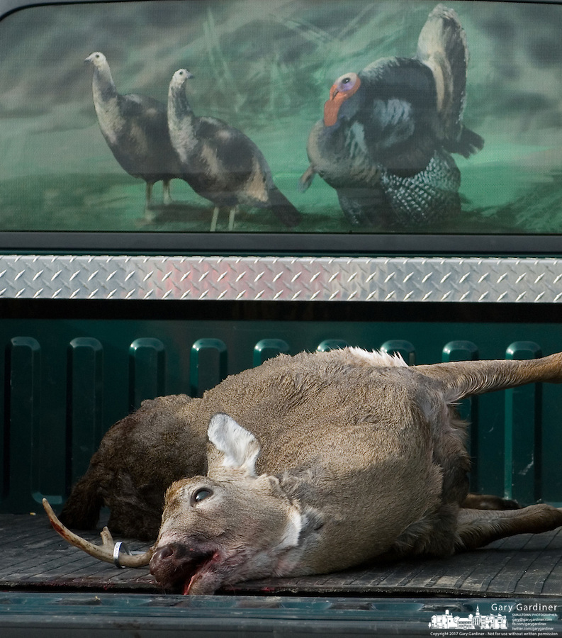 A deer sits in the bed of a truck with a turkey sign in the rear window<br />