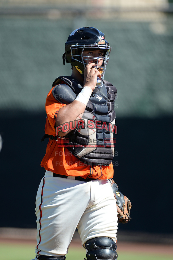 San Francisco Giants catcher Fernando Pujadas (12) during an instructional league game against the Arizona Diamondbacks on October 3, 2013 at Giants Baseball Complex in Scottsdale, Arizona.  (Mike Janes/Four Seam Images)