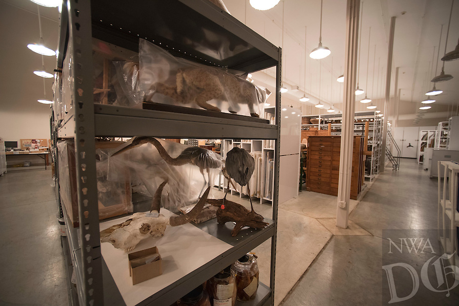 Northwest Arkansas Democrat Gazette/SPENCER TIREY Stuffed animals as well as skulls and skeletons set on shelves at Univserity of Arkansas archeology departments archive in Fayetteville Friday, February 26, 2016.