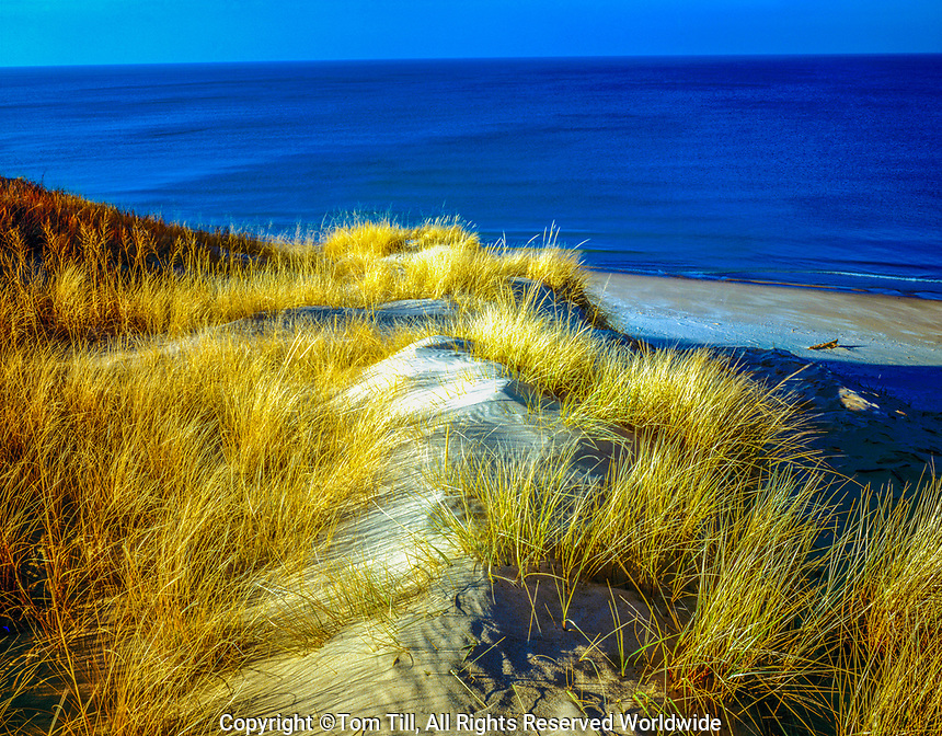 Dune grasses in winter, Indian Dunes National Lakeshore, Indiana  Lake Michigan   Seen from Mt. Baldy