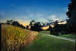Cornfield Sunset near Lewis Jackon Airport, Xenia, Greene County OHio