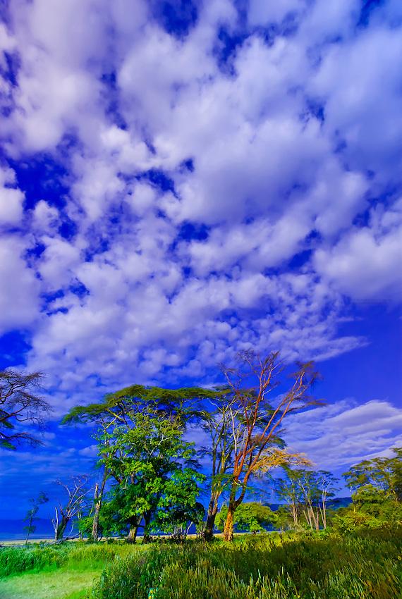 Trees, Ngorongoro Crater, Ngorongoro Conservation Area, Tanzania