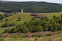 24/06/15<br /> <br /> Summer sunshine illuminates acres of purple rhododendrons surrounding Boot's Folly high up on Strines Moor in the South Yorkshire Peak District near Sheffield.<br /> <br /> All Rights Reserved - F Stop Press.  www.fstoppress.com. Tel: +44 (0)1335 418629 +44(0)7765 242650