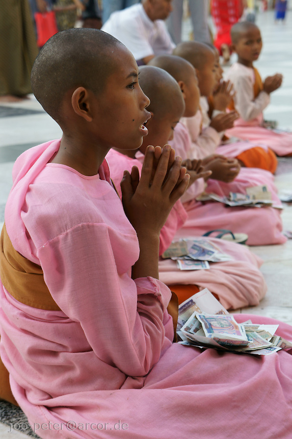 young nuns in pink robes pray in front of main stupa in Shwedagon pagoda complex, Yangon, Myanmar, 2011. Devotees donate money while the nuns are praying.