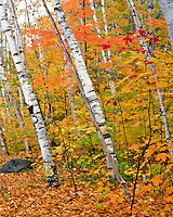 Fall forest in White Mountains New Hampshire