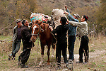 The full story is coming soon! Hidden in Central Asia's mountainous landscape is a series of habitats that defy all expectations. Here thousands of acres of juniper, Tien Shan fir, walnut, wild cherry, plums, apricots and wild apple, the originator of all domestic apples that spread throughout the world from the spice road onwards, reside. In these photographs we find a highly threatened habitat and a biodiversity hotspot. Barney has documented the beautiful landscapes and the people who rely on the harvest from this wild resource. The story looks at how NGO's have helped the Kyrgyz government to raise local income though forest rental systems whilst protecting biodiversity. Barney also spent time at tree trials in the UK where new ways of growing walnut are offering fast growing and valuable timber that could help the West to rely less on imports of tropical timber. This story works to show the value of saving this incredibly rich source of genetics, helping people on very low incomes to exist in a more balanced way with the natural world and the natural beauty of this region.