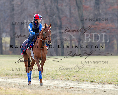 Fair Hill Training Center - January 8 2012