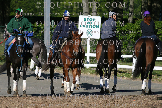 Thoroughbreds cross the train tracks on their way to the track during early morning workouts at Monmouth Park in Oceanport, N.J. Photo By Bill Denver/EQUI-PHOTO