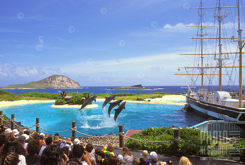 Dolphins leaping out of the water during a performance at Sea Life park with rabbit island  off the windward coastline