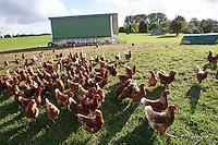 Freiland-Hühner, Freilandhühner, freilaufende Hühner, Huhn, Hühner, Freilandhuhn, Biohühner, artgerechte Tierhaltung, Eier, Bioei, Bioeier, Biobauer, alternative Landwirtschaft, glückliche Hühner, free-range hens, chicken, hen, egg, eggs, free-range eggs