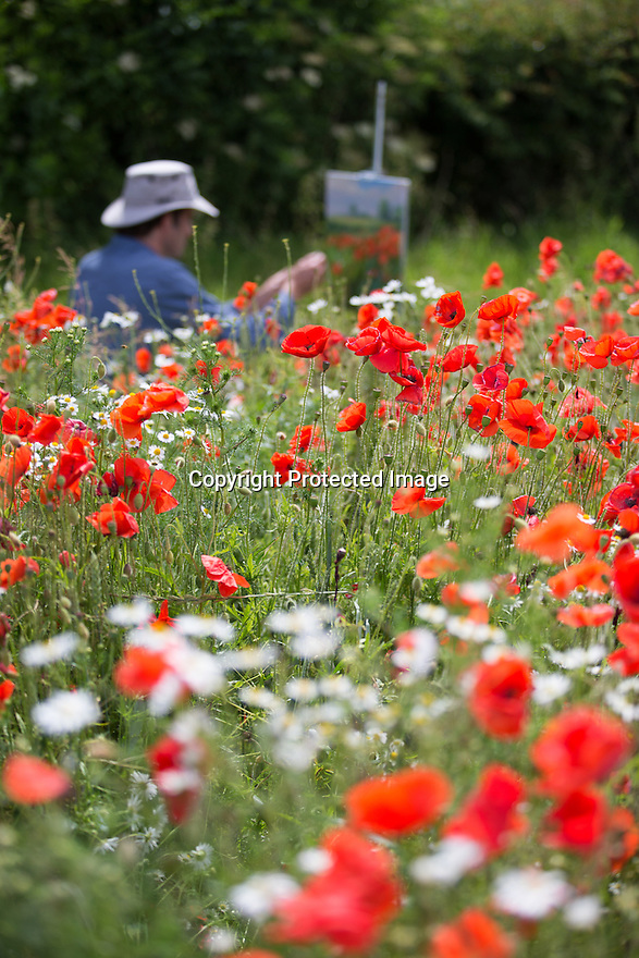 10/07/15<br /> <br /> Artist, Mark Preston, from Derby, paints a field of poppies near Brailsford, Derbyshire.<br /> <br /> <br /> All Rights Reserved: F Stop Press Ltd. +44(0)1335 418629   www.fstoppress.com.