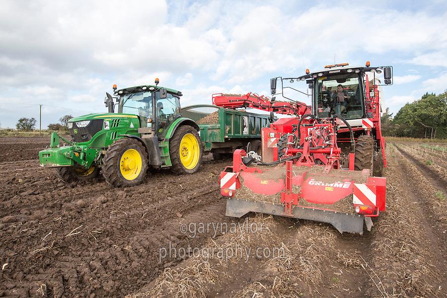 Harvesting potatoes, Grimme Varitron 220 - Lincolnshire, October