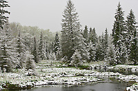 Late May snowy morning at a beaver pond in Riding Mountain National Park