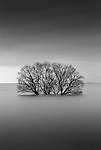 Tree partially submerged, Lake Biwa, Japan<br /> <br /> For stock licensing please contact info@artwolfe.com or 206.332.0993
