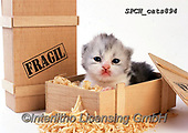 Xavier, ANIMALS, REALISTISCHE TIERE, ANIMALES REALISTICOS, cats, photos+++++,SPCHCATS894,#a#, EVERYDAY