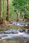 Cascades-Rainforest
