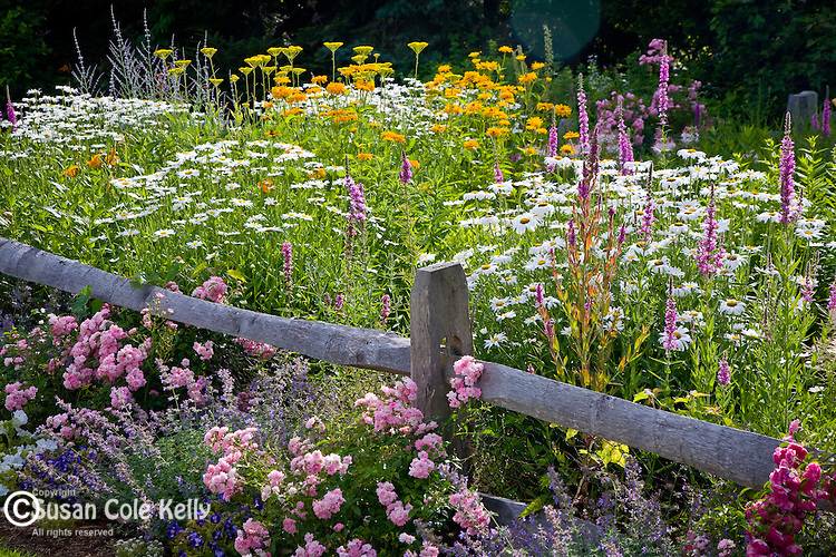 A summer garden in Harwich, Cape Cod, MA, USA