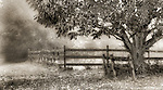 Country scene of fence and tree in fog